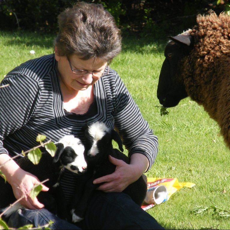 last lambs 2011 022